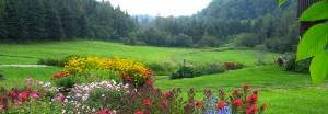 paysage-fleurs-web